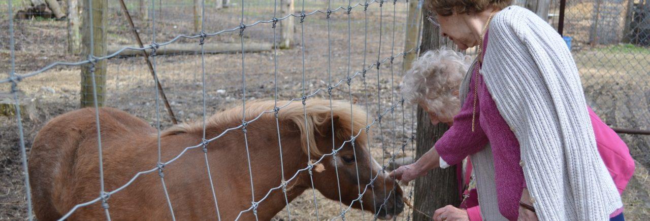 two ladies feeding minature donkey